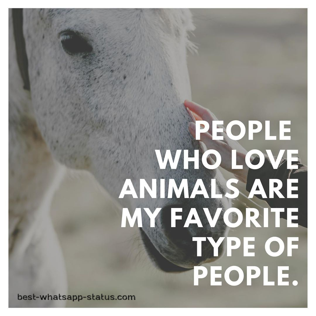 animal lovers pic